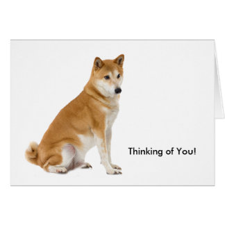 Dog image for Greeting card