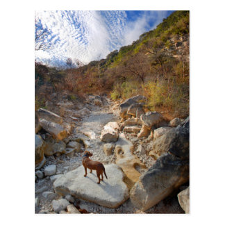 Dog in Barton Creek Dry - Austin Texas Postcard