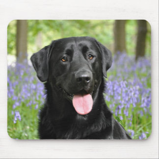 Dog in Bluebells Mouse Pad