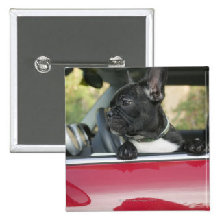 Dog in car 2 inch square button