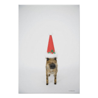 Dog in Christmas hat Poster