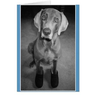 """""""Dog in Clogs"""" - funny blank b&w art card"""