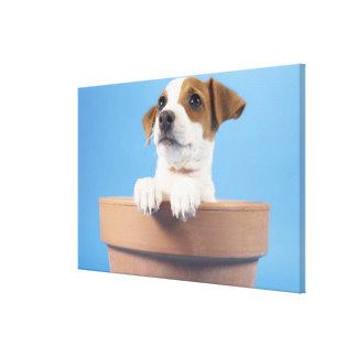 Dog in flowerpot canvas print
