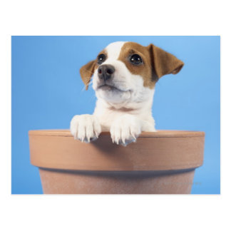 Dog in flowerpot postcard
