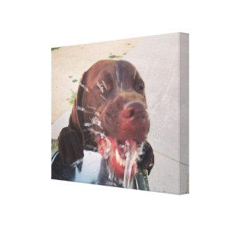 Dog in fountain canvas print