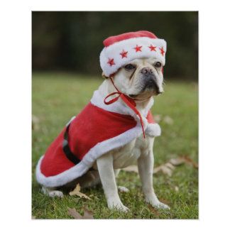 Dog in holiday costume poster