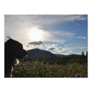 Dog in mountain flowers photo print