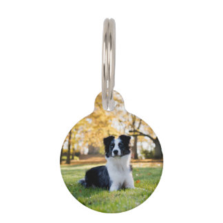 Dog in the Nature Pet Nametag