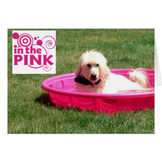 DOG-IN THE PINK/IN THE POOL ON YOUR BIRTHDAY GREETING CARDS