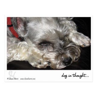 dog in thought.. postcard