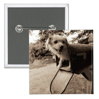 Dog Inside a Mailbox 2 Inch Square Button