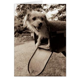 Dog Inside a Mailbox Card