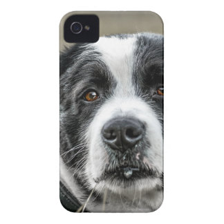 dog iPhone 4 case