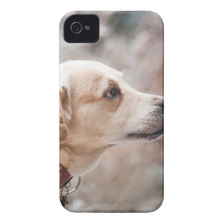 dog iPhone 4 Case-Mate case
