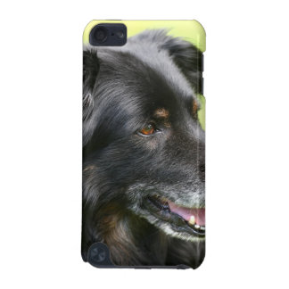 dog iPod touch (5th generation) covers