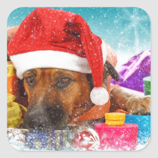 Dog is waiting for Christmas Square Sticker