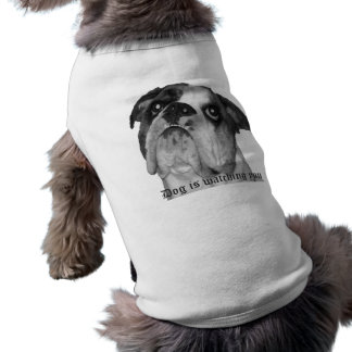 Dog is watching you dog shirt. pet tee shirt