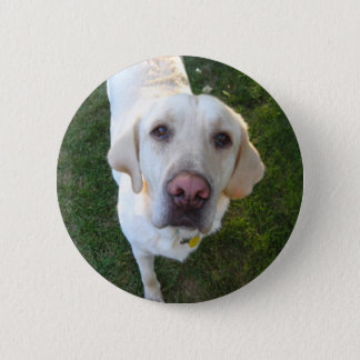 dog, Labrador Retriever 2 Inch Round Button