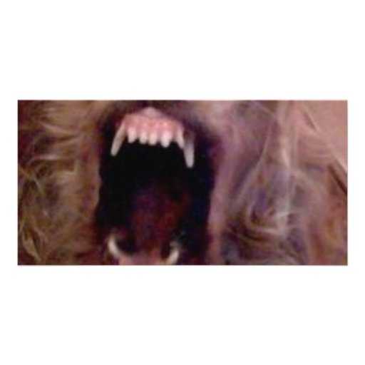 DOG laughing Customized Photo Card