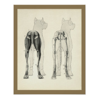 Dog Leg Skeleton Muscle Anatomy Print