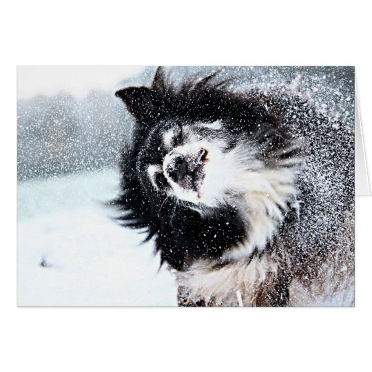 Dog Let it Snow Holiday Card