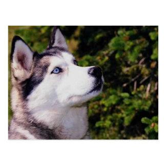 Dog Lookin Upward Postcard