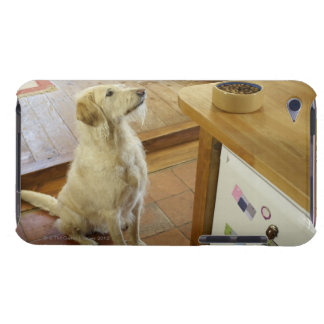 Dog looking at food on table. iPod touch cover