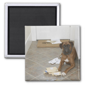 Dog lying by doormat and chewed mail magnet
