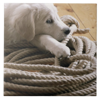 Dog lying with rope on wooden floor, elevated tile