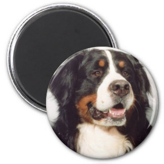 Dog Magnet