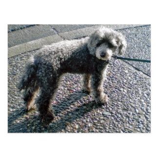 Dog named Louis Postcard