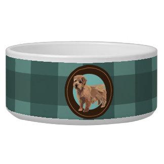 Dog Norfolk Terrier