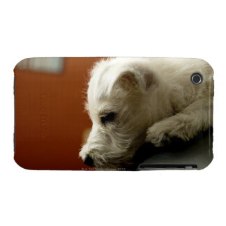 Dog on office chair iPhone 3 Case-Mate cases