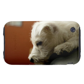 Dog on office chair iPhone 3 tough covers
