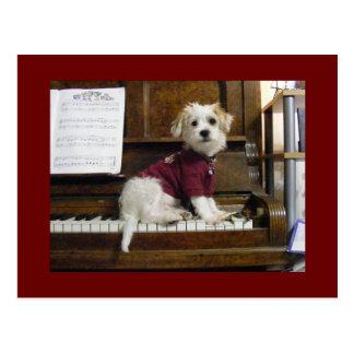 Dog on piano postcard