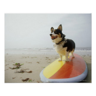 Dog on surfboard poster