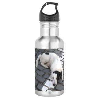 Dog On The Line 532 Ml Water Bottle