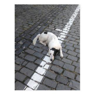 Dog On The Line Postcard