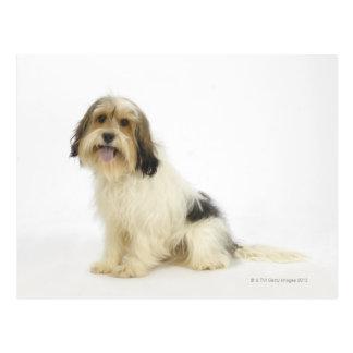 Dog on White 104 Postcard