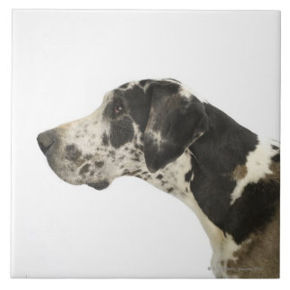 Dog on White 11 Tile