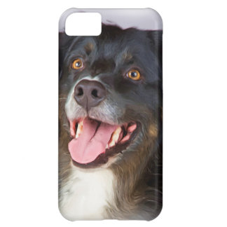 Dog painting - dog art - pet art case for iPhone 5C
