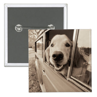 Dog Peeking Out a Car Window 2 Inch Square Button