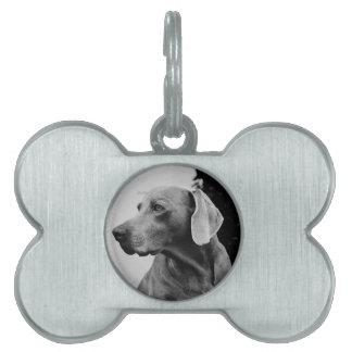 dog pet name tag