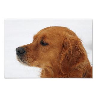dog photo art