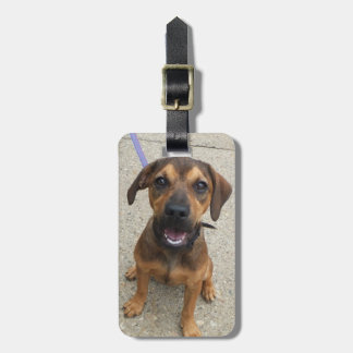 Dog Photo Luggage Tag