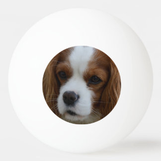 Dog Ping Pong Ball