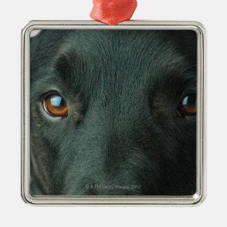 Dog portrait close up Silver-Colored square ornament