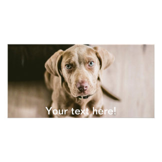 Dog portrait photo greeting card