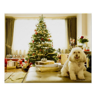 dog posing in front of Christmas tree Poster