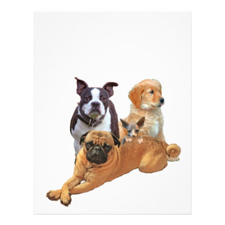 Dog posse with cat letterhead